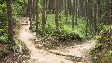 Two paths diverging in a forest