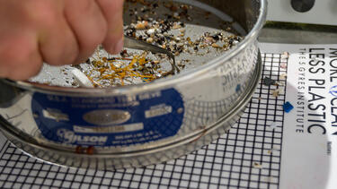 Microplastic collected from the Sargasso Sea. Photo: Tom Gruber.