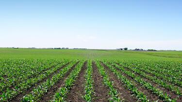 How Big Can Organic Grow?