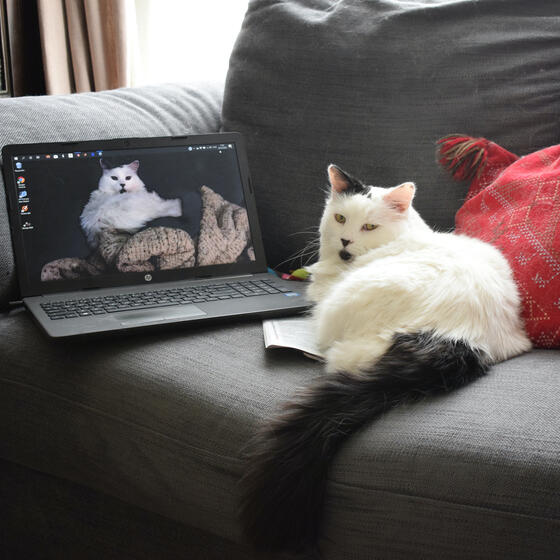 A cat sitting next to a laptop on a sofa